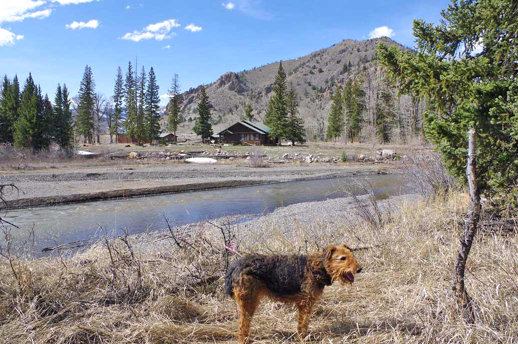 Airedale in Absaroka Mountains